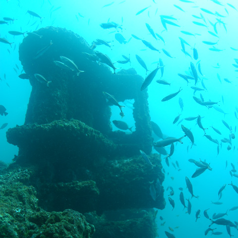 north-island-excursions-wreckdiving-1