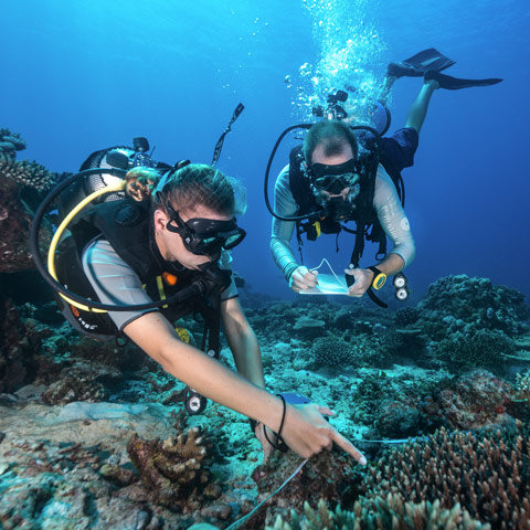 north-island-aboutnorth-conservation-dive