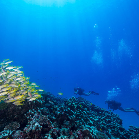 See spectacular coral reefs while diving on North Island
