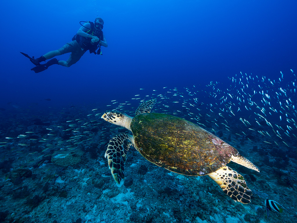 A divers guide to Seychelles - inclusive diving at North Island Resort